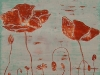 Red Poppy One